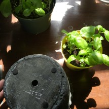 Ensure Good drainage in chosen pot