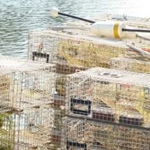 Lobster - Jewett Farms + Co. celebrates Summah in New England