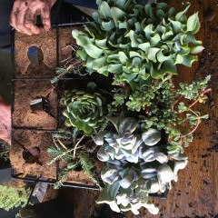 Jewett Farms + Co. Blog Hanging Gardens