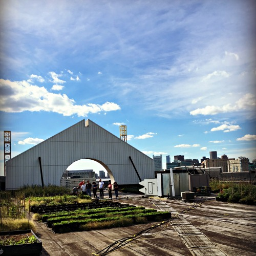 Jewett Farms + Co. Rooftop Farm at the BDC